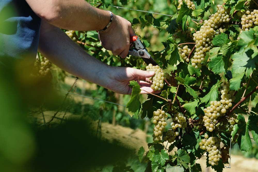 A Bright Harvest – Nicola Biasi